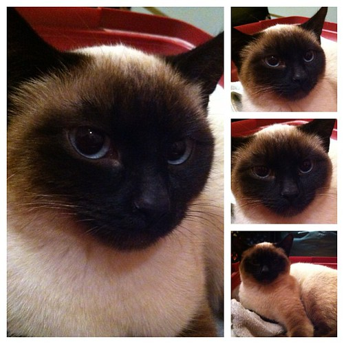 The many faces of Toonces.