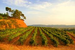 Vinyes mirador  del Penedes, Torrelles de Foix.