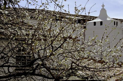 Primavera em flor by @uroraboreal