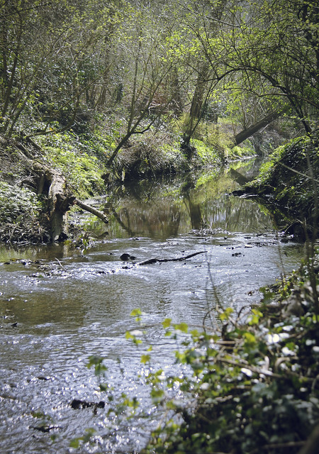 Hogsmill River near Malden Manor