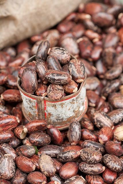 Beans, Harar, Ethiopia, 2009