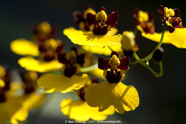 2012春季蘭花展