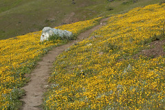 Path in Yellow