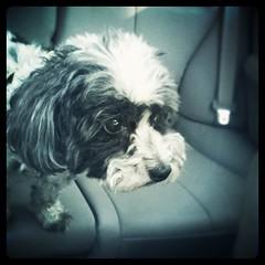 Stella in the Subaru