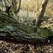 Rainham Nature Reserve