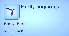 Firefly Purpureus