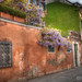 <p>A well-photographed wisteria tree on a Venice side street.</p>