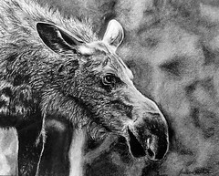 sketch(1.0), moose(1.0), monochrome photography(1.0), fauna(1.0), drawing(1.0), monochrome(1.0), black-and-white(1.0),