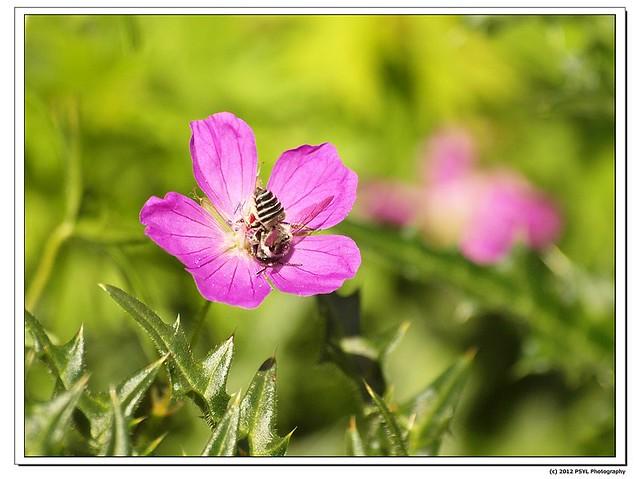 2012-04-21-P4210855_nEO_IMG