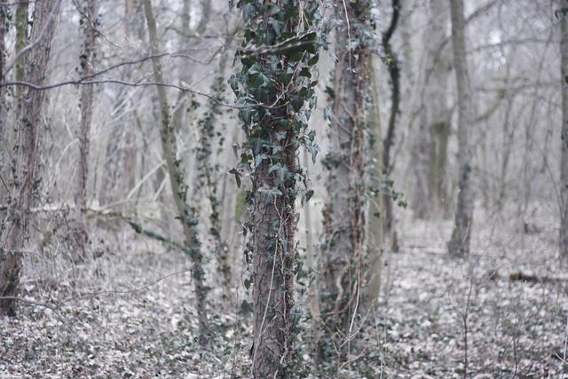 hejregina träd3