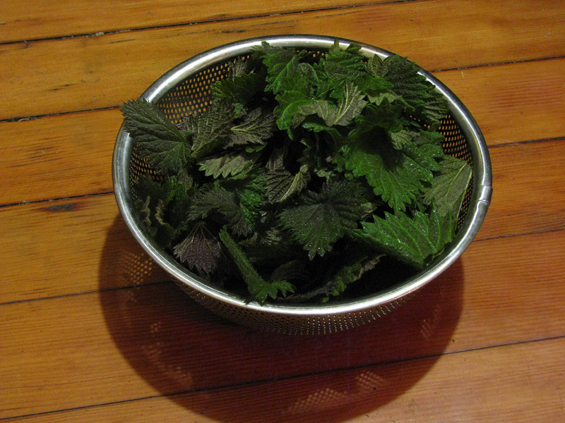 Bowl of Spring Nettles