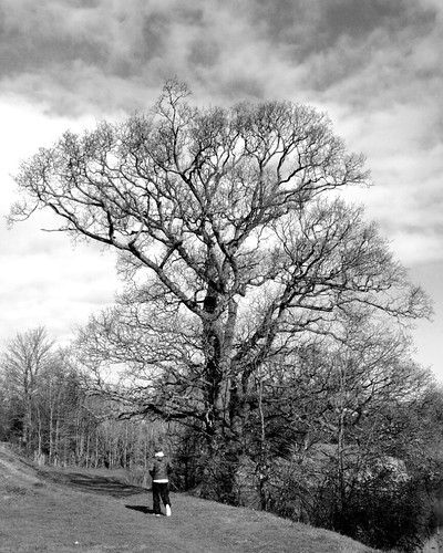 Tree, Fort Brockhurst