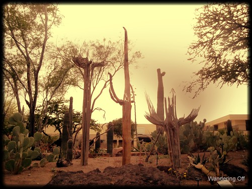 "Saguaro ""skeletons"""