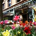 Spring Tulips on Pearl Street