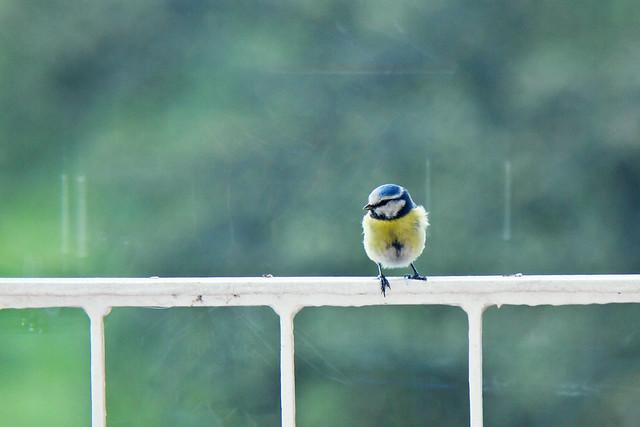 Look, a bird