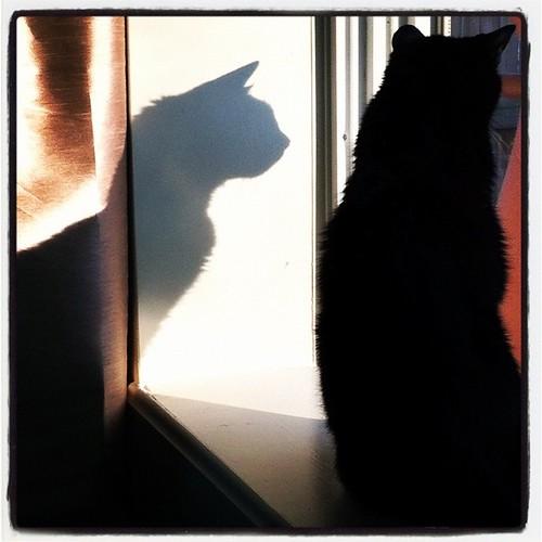 Jasper & shadow