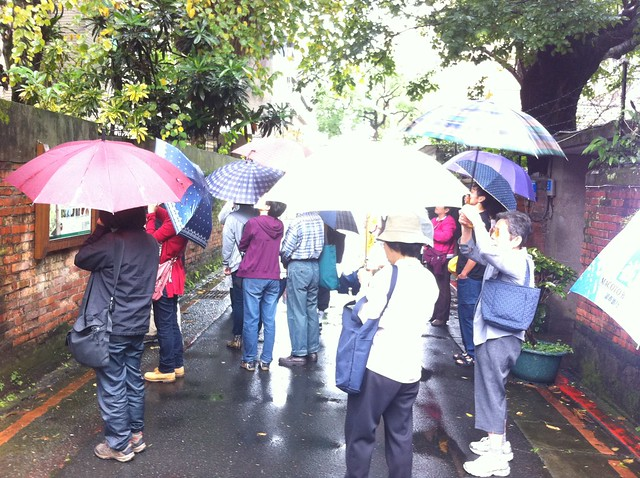 在雨中介紹台灣油杉