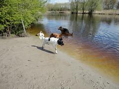 Zwemmen in Reeuwijk