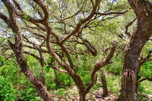 trees florida fl davie treetopspark nikond800 nikonnikkor2412014ged