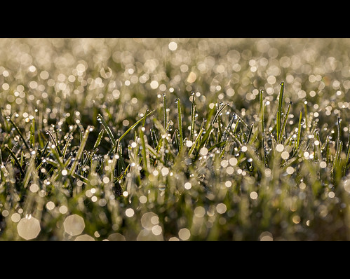 morning grass sunrise early bokeh dew shimmering greely
