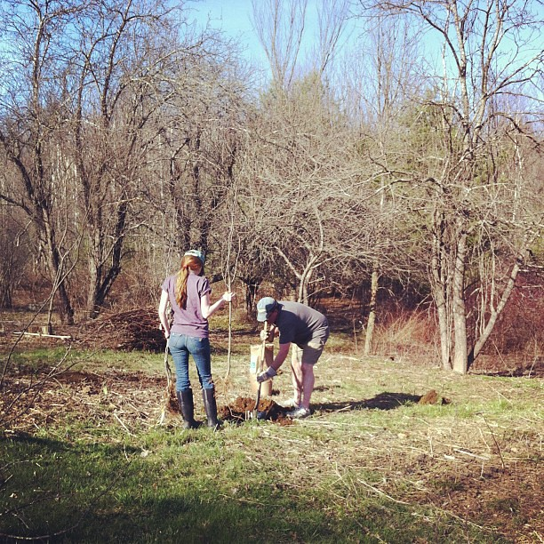 orchard beginnings #organic #maine #homestead