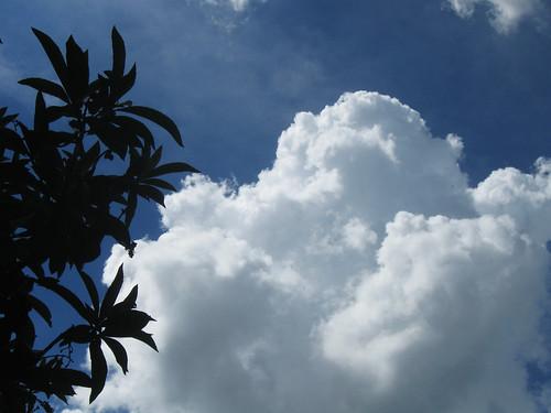 Como nubes de algodón
