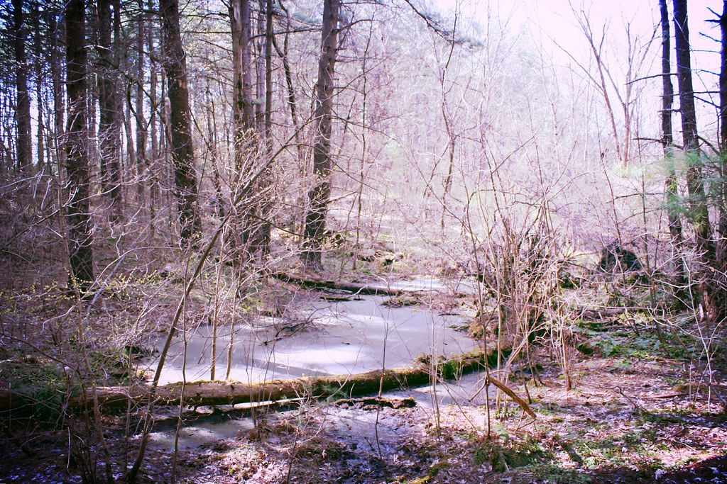You find a strange stream in the woods.