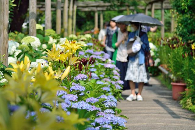 初夏の筥崎宮