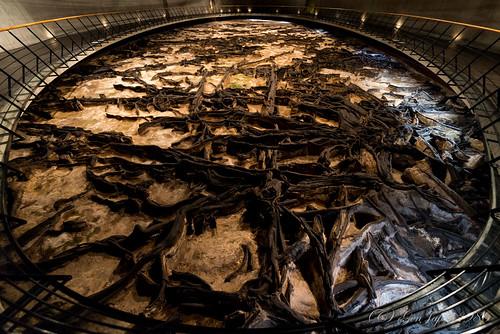 2016 仙台市 地底の森ミュージアム 太白区 宮城県 東北地方 日本 japan nikond610 museum miyagi