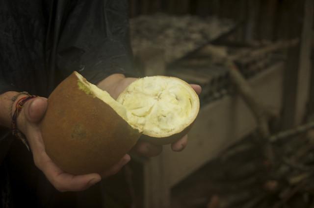Copoazu Fruit