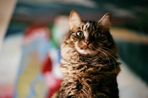 [フリー画像素材] 動物 1, 猫・ネコ ID:201203051000