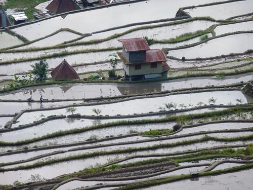 Luzon-Batad (91)