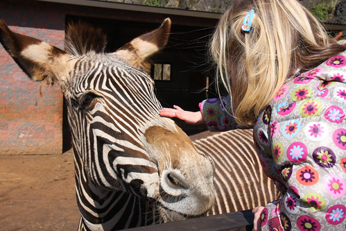 Nora with Zebra