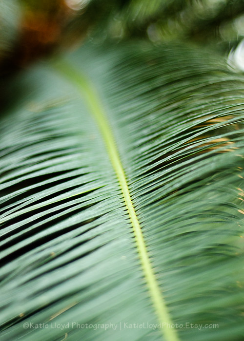 Palm-Frond-verticle---5x7
