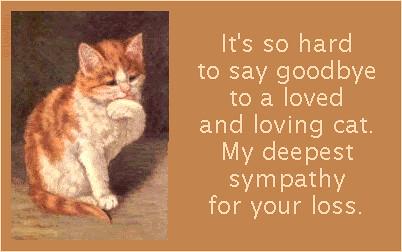 Sympathy-Cat