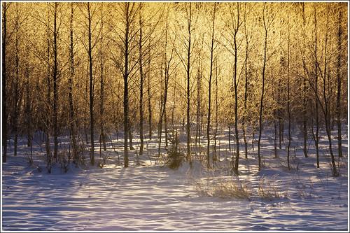 20120201. Golden light. 2488. by Tiina Gill