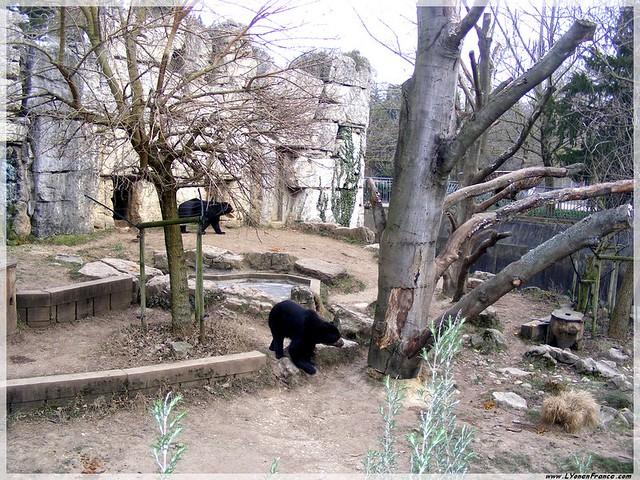 ours+parc+tête+d'or+lyon