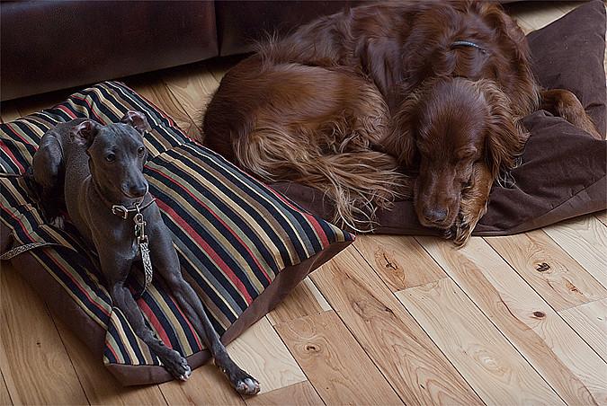 dog beds for blog