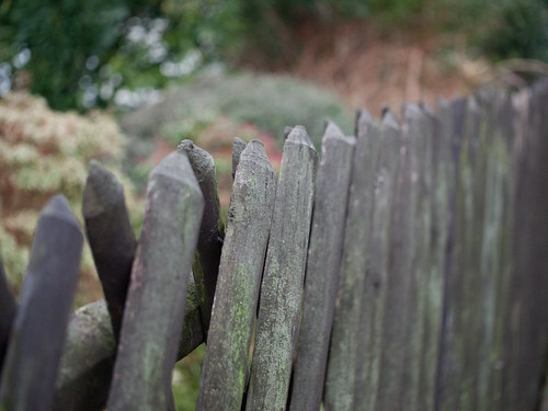 Happy Fence Friday!