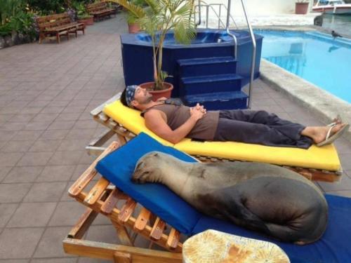 Pinchita the Seal