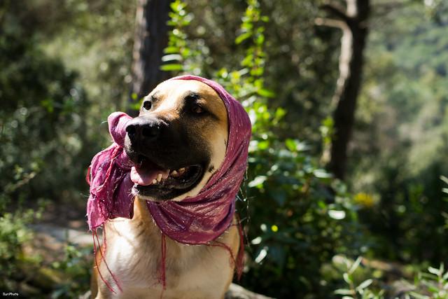 Desfile canino - 2