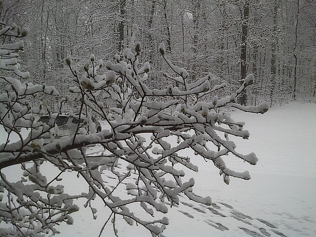 Sudden Virginia snow