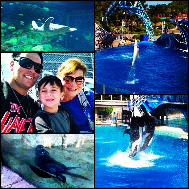 Sea World Instagram