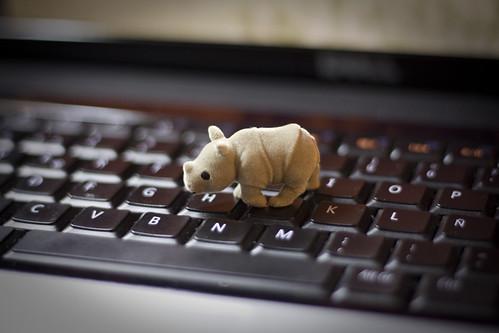 Mini-rinoceronte juguetón