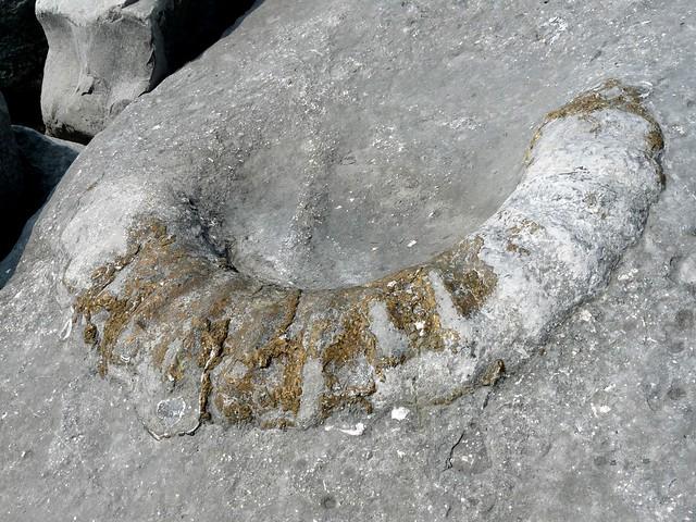 24273 - Fossil Ammonite, Lyme Regis