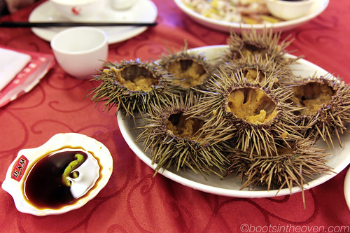 Beautiful (and RICH) sea urchin