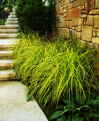 Grasses and hostas border the cement walkway.