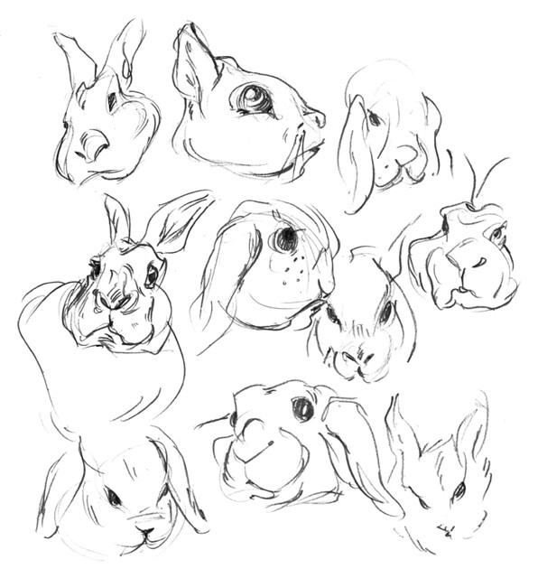 Sketchbook bunnies