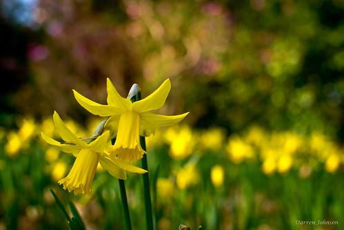 Giardino e primavera