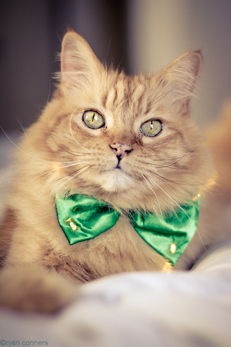 Happy St. Patrick's Day! -Puddy O'Quinn by Kilkennycat